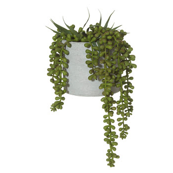 Rogue 15 x 27cm String of Pearls Cement Pot