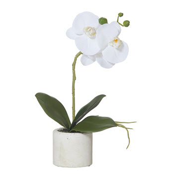 Rogue 30cm Butterfly Orchid Stone Pot