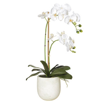 Rogue 60cm Butterfly Orchid Stone Pot