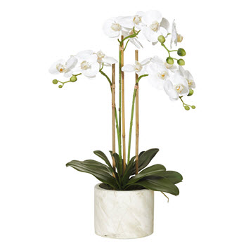 Rogue 58cm Butterfly Orchid Stone Pot