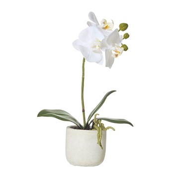 Rogue Butterfly Orchid-Smooth Pot 17 x 8 x 30cm White