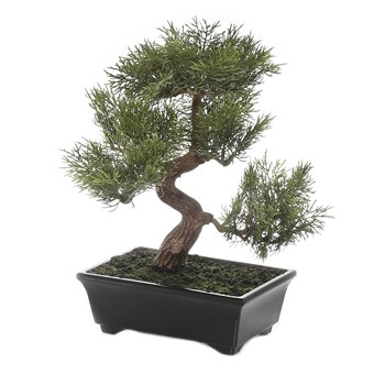 Florabelle Living Plastic & Ceramic Bonsai in Black Pot 19 x 23cm