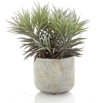 Florabelle Living Plastic & Ceramic Needle Succulent in Pot 12 x 7cm
