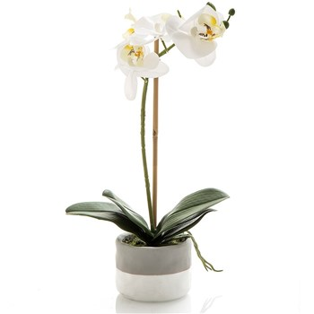 Florabelle Living Plastic Orchid in Small Ceramic Pot White