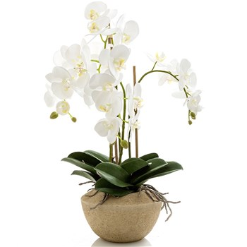 Florabelle Living Plastic Orchid in Stone Pot 35 x 35 x 65cm White