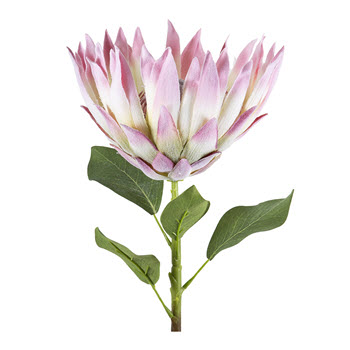 Florabelle Protea Spray Open with Leaves Pink 71cm